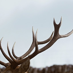 freetoedit reindeer animal backgrounds sky
