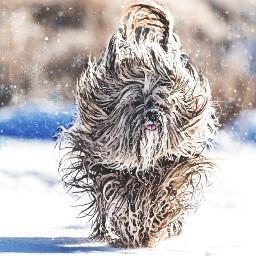 freetoedit wonderlandeffect wavyhair dog snow