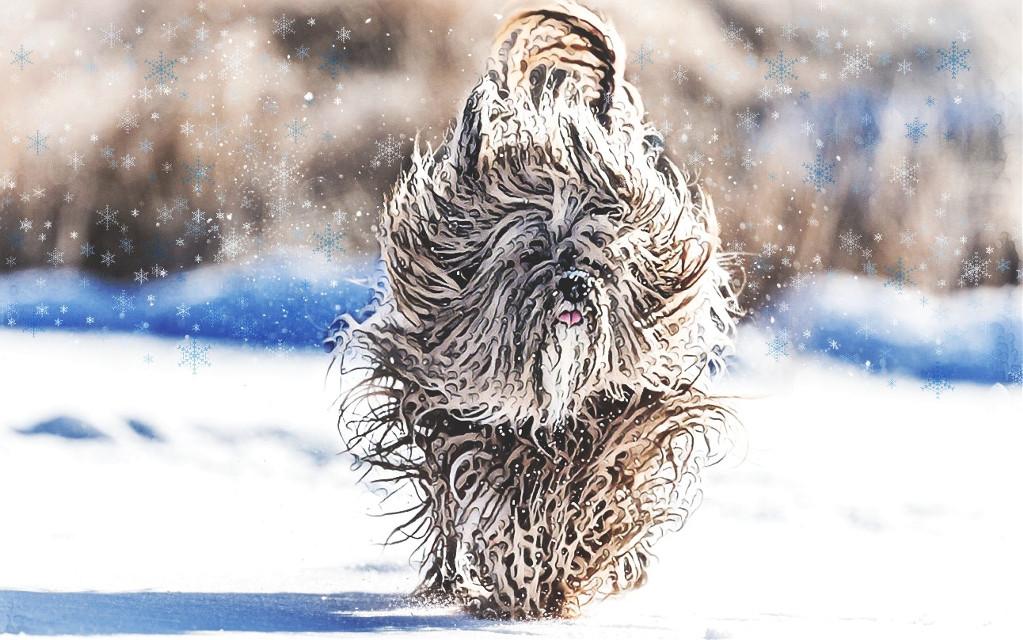 ❄️🐶#wonderlandeffect #wavyhair #dog #snow #flakes #pa #winterremix