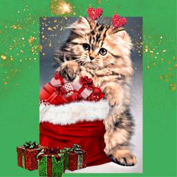 freetoedit kittycat christmasremix christmasstickers