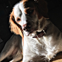 winter sunny beautyfulday dog