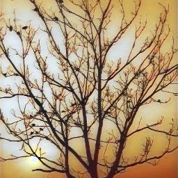 freetoedit. treeart bird feast freetoedit