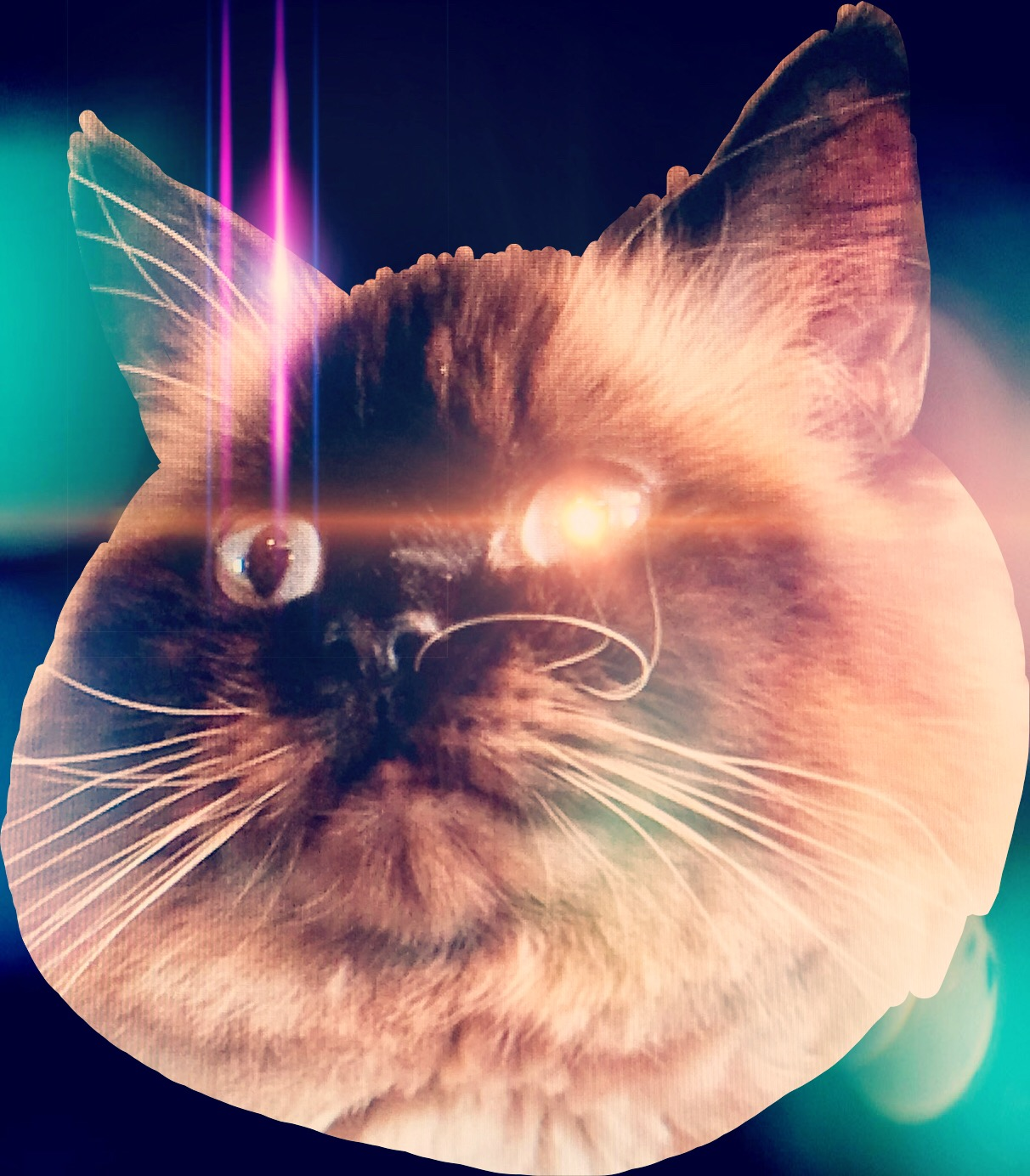 #lasereyes #galaxycat #cathead