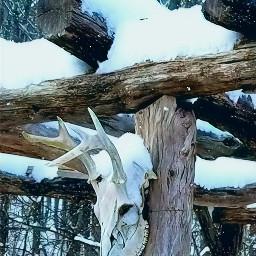 deerskull snowday winterishere