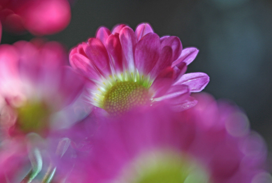 #flowers #pink #nature
