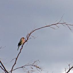 bird lonely nature