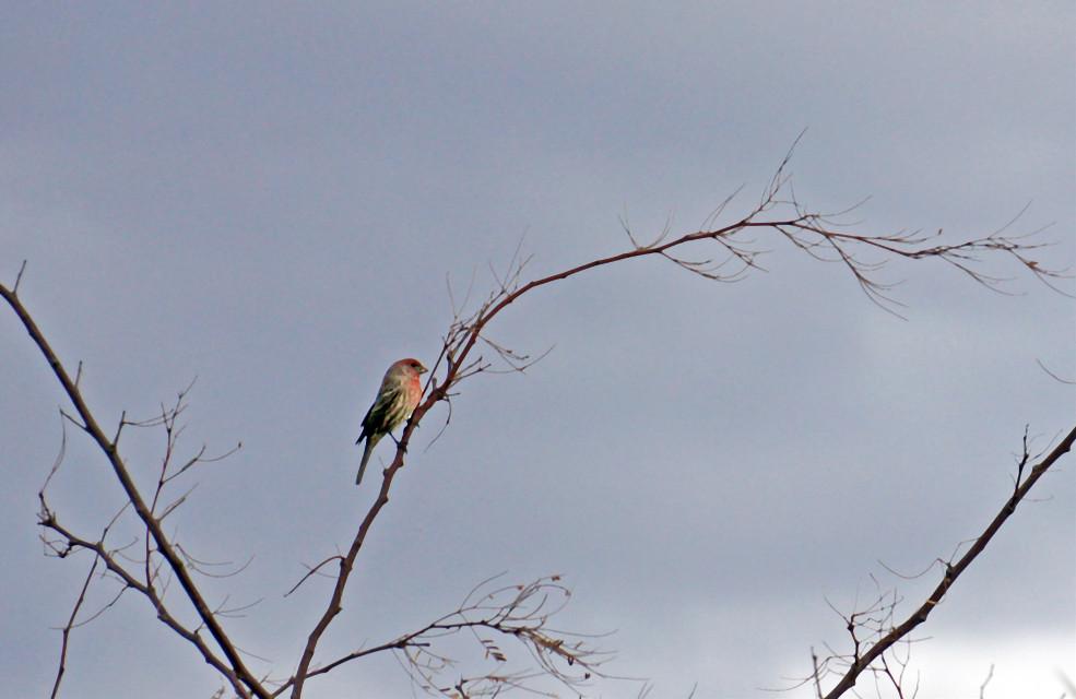 #bird #lonely #nature