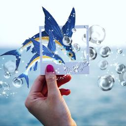 polaroidremix freetoedit flyingfish bubble happy