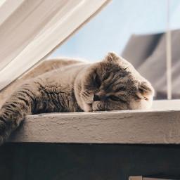 kitty cat adorable cute remix freetoedit