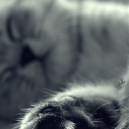 kittylove lovecats lovecat catpaws catlove