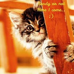 kittylove catlove lovecats inlove catsphotography