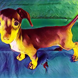 lilellie dacshund furbabyselfie