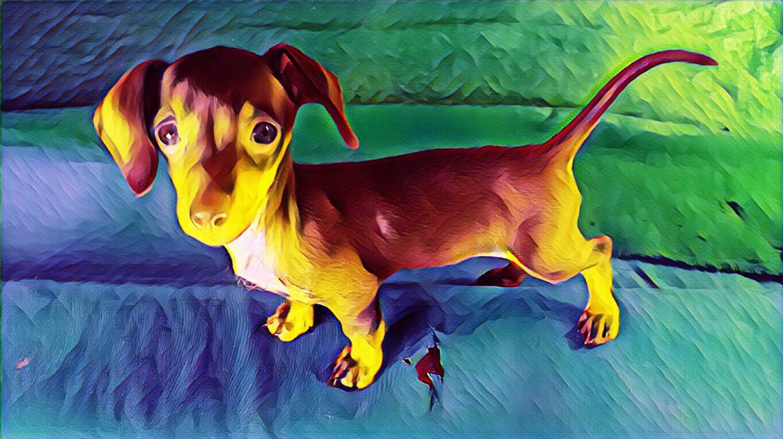 #lilellie #dacshund #furbabyselfie
