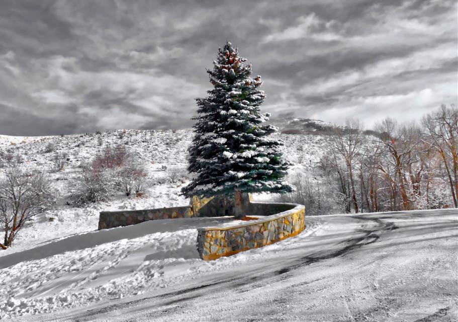 The Last Christmas Tree #AngelEyesImages#landscape#landscapephotography#nature#naturephotography#trees#christmastrees#instagram#instagramers#instagrammers#picsart#picoftheday#nikon#nikonusa#nikonphotography#nikond5300#canonusa#lumixusa#utahlandscape#landscapephotography