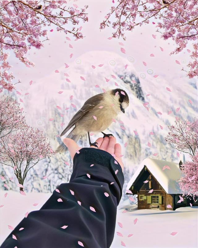 #art #digitalart #winter #wintertime #winterday #snow #snowy #snowyhouse #trees #sakura #sakuratrees #sakuratree #pink #pinkblossom #sakurarain#sakuraart #bird #sweetart #sweetbird #scenery #house #sweethouse