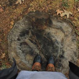 tree lookingdown fall unedited