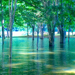 lago yauco puertorico interesting art freetoedit