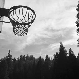 freetoedit basketball hoop forest blackandwhite