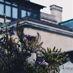 pcstilllife stilllife