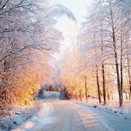 nature snow cold alberta canada freetoedit