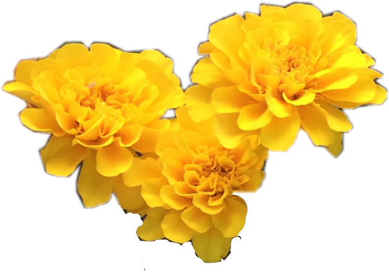 Flowers tumblr yellow freetoedit report abuse mightylinksfo