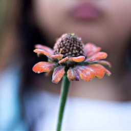 50mm photography photo girl freetoedit