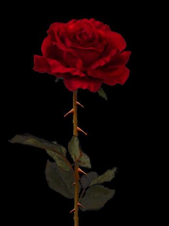 tumblr tumblraesthetic aesthetictumblr aesthetic rose...