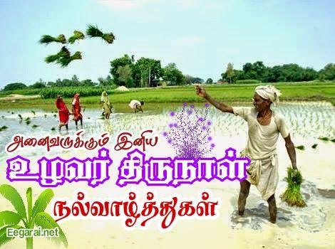 Image result for உழவர் திருநாள்
