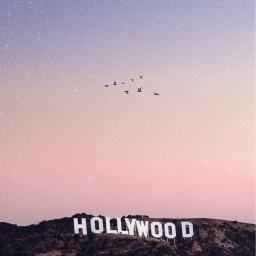 hollywood birds pink sky minimalism freetoedit