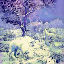 freetoedit scenery art wolf gk