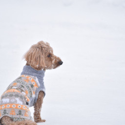 puppy dog adorable cute snowy freetoedit