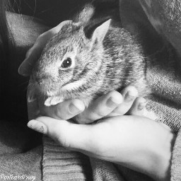 hands babyanimals blackandwhitephotography cute bunny freetoedit