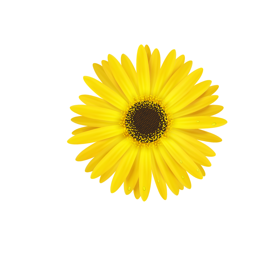 Daisy bloom flower border flowers white bouquet multipl daisy bloom flower border flowers white bouquet multipl izmirmasajfo