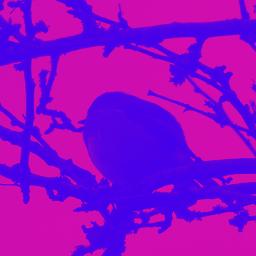 photography nature robin petsandbirds tree
