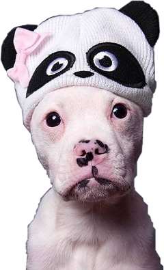 ftestickers sticker dog puppy adorable freetoedit