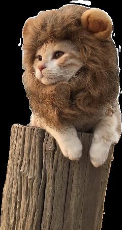 ftestickers cute animal cat kitten freetoedit