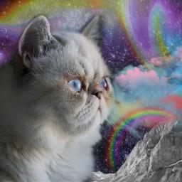 freetoedit cat moon rainbow color