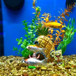 freetoedit pclookingdown lookingdown welovepets fishtank