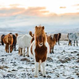 freetoedit animals winter horse pony