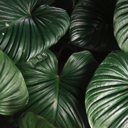 freetoedit plant leaves shadow highlights