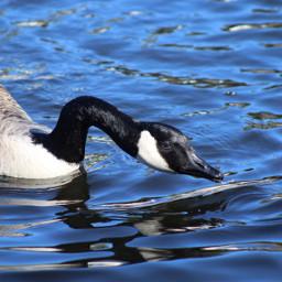 unedited goose water details