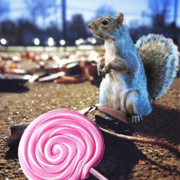 freetoedit remixit squirrel lollipop candy thrown floor leafs lollipop dailysticker ftestickers coolstickers picsart pa remixed remixme