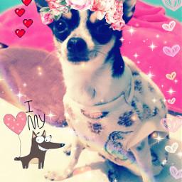 lovedogs edit pets cuteanimals freetoedit