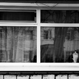 photography hdr blackandwhite petsandanimals doorsandwindows