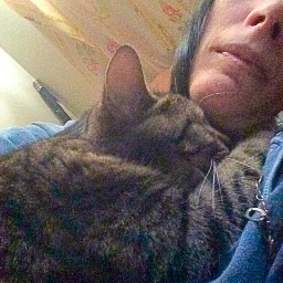 pcromantic romantic freya snuggly rescuecat