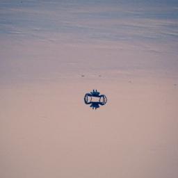 freetoedit crab evening beach minimalism