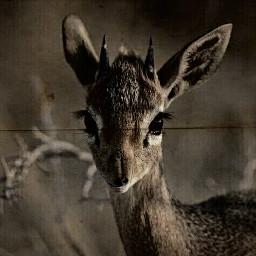freetoedit deer nature_beauty nature
