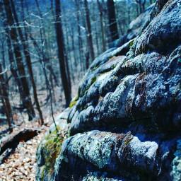 freetoedit forest nature usa exploring