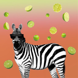 freetoedit zebra lime lemon interesting