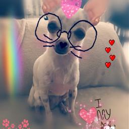 loveyou pets perros cute snapchat freetoedit